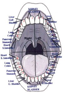 Teeth-and-Acupuncture-Meridians